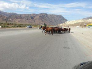 En Route in Kyrgystan