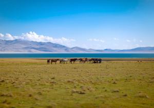 Horses at Son Kul Lake, Kyrgyzstan